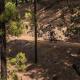 Durch satt grüne Kiefernwälder Höhenmeter erklimmen