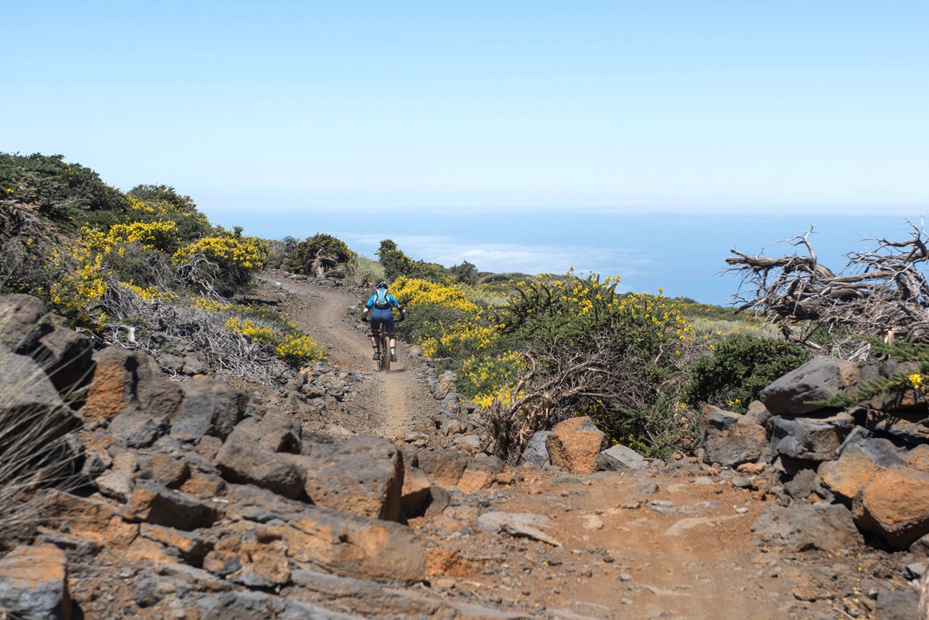 Abfahrt vom Roque de los Muchachos mit Start oberhalb der Baumgrenze